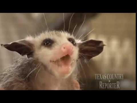Opossum Rescue (Texas Country Reporter)