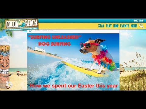 Dog Surfing Championship Cocoa Beach Florida