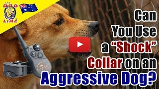 "Can You Use a ""Shock"" Collar on an Aggressive Dog? 