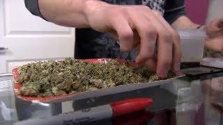 cannabis bill awaits royal assent after senate passing