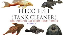 Pleco (Tank Cleaner) Fish Characteristics and gender Indentification in Tamil by Vens Aquatics