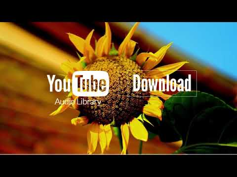 Sunflower - Topher Mohr and Alex Elena (No Copyright Music) 1 Hour Loop