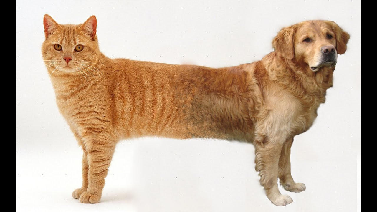 Are Cat Dog Hybrids Real