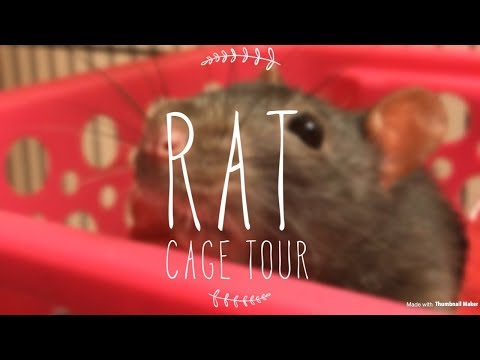 rat-cage-tour-(updated)