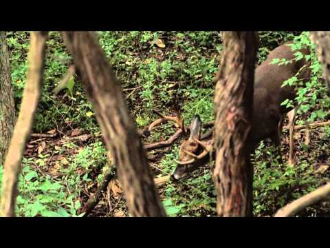 Blitz TV - Western Illinois Trophy Outfitters