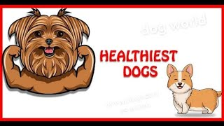 healthiestdogbreeds30dogswiththeleasthealthproblems