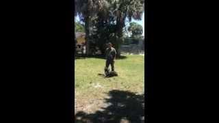Florida Dog Academy - Basic Obedience Training With Doberman Cain