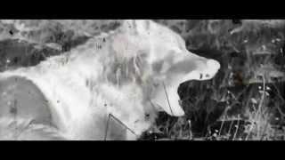 Calvert x K Zorro - The Wolves [Official Video]