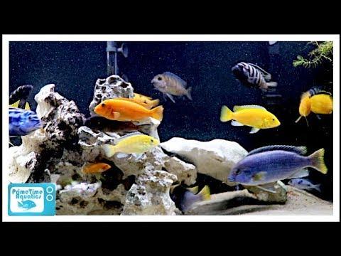 Fish Tank Showdown: 55 Gallon Vs 75 Gallon - Which Is Better?