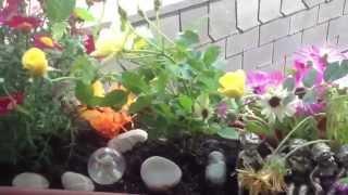 Домашний VLOG понедельник #посадка цветов(, 2014-06-02T11:20:51.000Z)