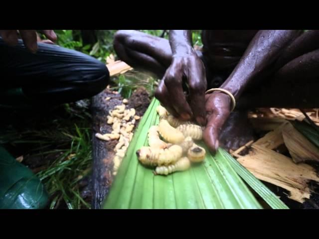 Индонезия. Экспедиция в джунгли острова Новая Гвинея. 11 серия (1080p HD) | Мир Наизнанку - 5 сезон