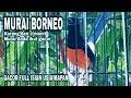 Murai Batu Borneo Gacor Full Isian  Mp3 - Mp4 Download