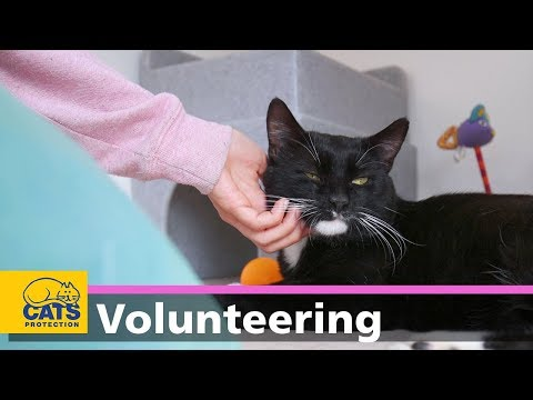 Volunteering With Cats Protection