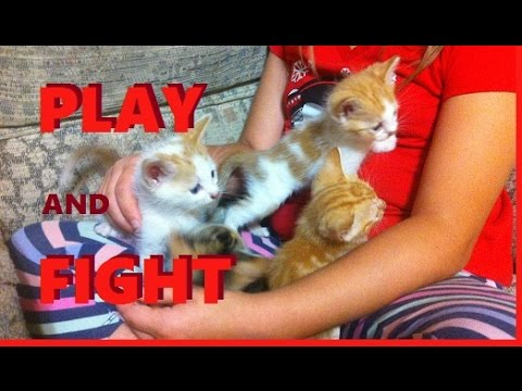Cute Kittens:   Playing and Fighting