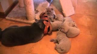 Чем занимается молодая кошка-мать, пока котята спят