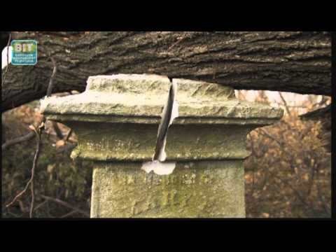 Brooklyn Storms Back: Green-Wood Cemetery Damage