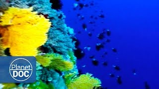 Indonesia. Coral Reef  | Tribes & Ethnic Groups