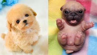 Как Выглядят Детеныши Собак Разных Пород! #2