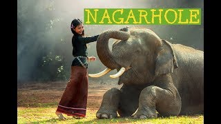 Nagarhole National Park In South India