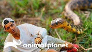 Cover images Ficou ardendo: Frank é mordido na mão por serpente venenosa   Perdido na Ásia   Animal Planet Brasil