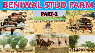 मारवाड़ी घोड़ो का घर कहा जाता है  BENIWAL STUD FARM | PART- 2 WITH YUDHVEER SINGH PAWAR