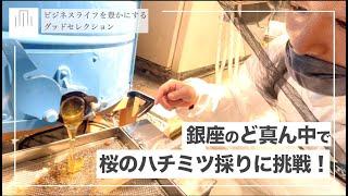 なんと!銀座のど真ん中で桜のハチミツ採りに挑戦!~グッドセレクション#18~