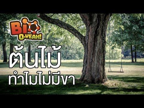 Bio-O-Yeah [by Mahidol] ต้นไม้ทำไมไม่มีขา