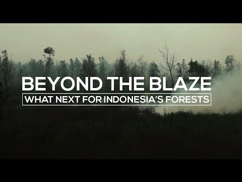 Beyond the blaze: What next for Indonesia's forests?