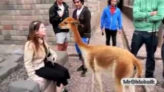 Смешные животные! САМЫЕ смешные видео про животных  Животные АТАКУЮТ!