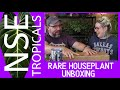 NSE Tropicals Rare Houseplant Unboxing  | More Philodendrons Please!