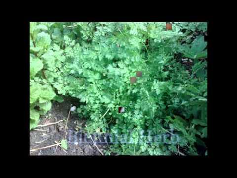 Herbs Video Documentary BUCH
