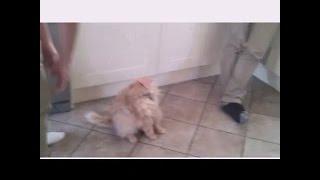 Кот с колбасой на морде )))