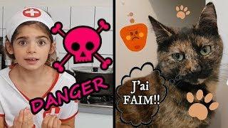 chats en danger