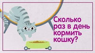 Сколько раз в день кормить кошку? — WHISKAS® К.Т.У.