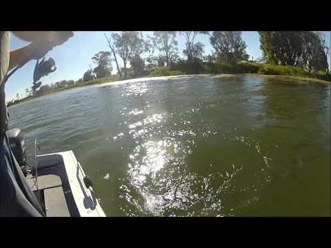 Fitzroy River Barra, Rockhampton QLD