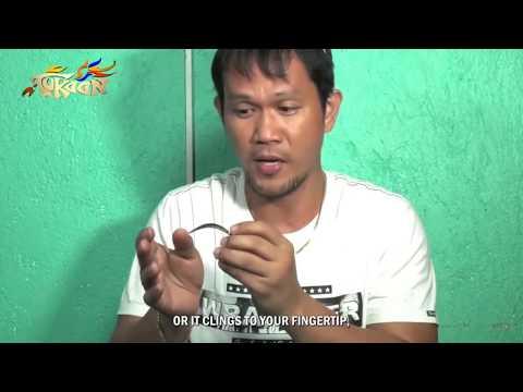 Tutorial Cara Pembuatan Pisau Taji Filipina