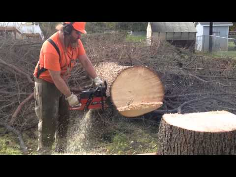 Masterminded Jonsered 2188 in white spruce