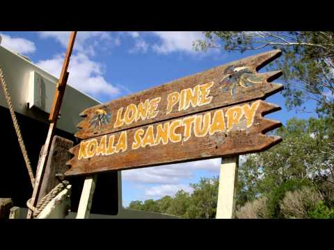 MIRIMAR CRUISES - Brisbane River Cruise to Lone Pine Koala Sanctuary