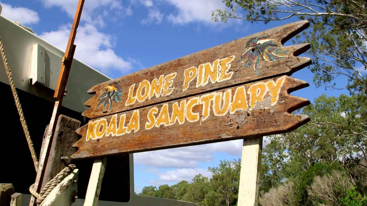 video Lone Pine Koala Sanctuary and River Cruise