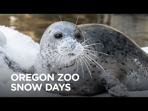 Oregon Zoo Snow Days