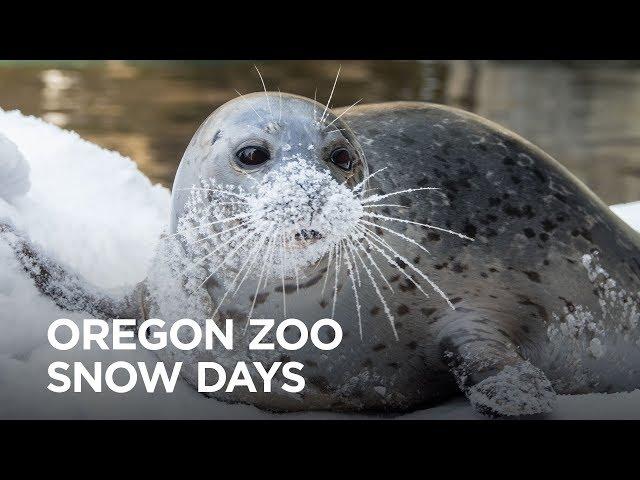 Oregon Zoo Snow Days