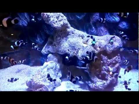 Sea Fish The Shore Oceanarium, Malacca