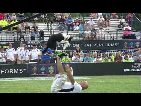 Freestyle Flying Disc 1st Place - 2015 Incredible Dog Challenge National Finals Gray Summit, MO