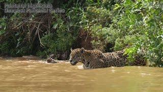Pantanal highlights - Deepest Pantanal series