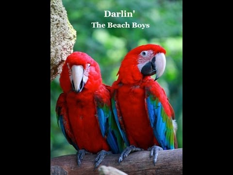 Darlin' (Lyrics) - The Beach Boys