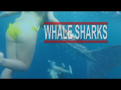CEBU CITY TO OSLOB | GETTING TO THE WHALE SHARKS | VLOG 19
