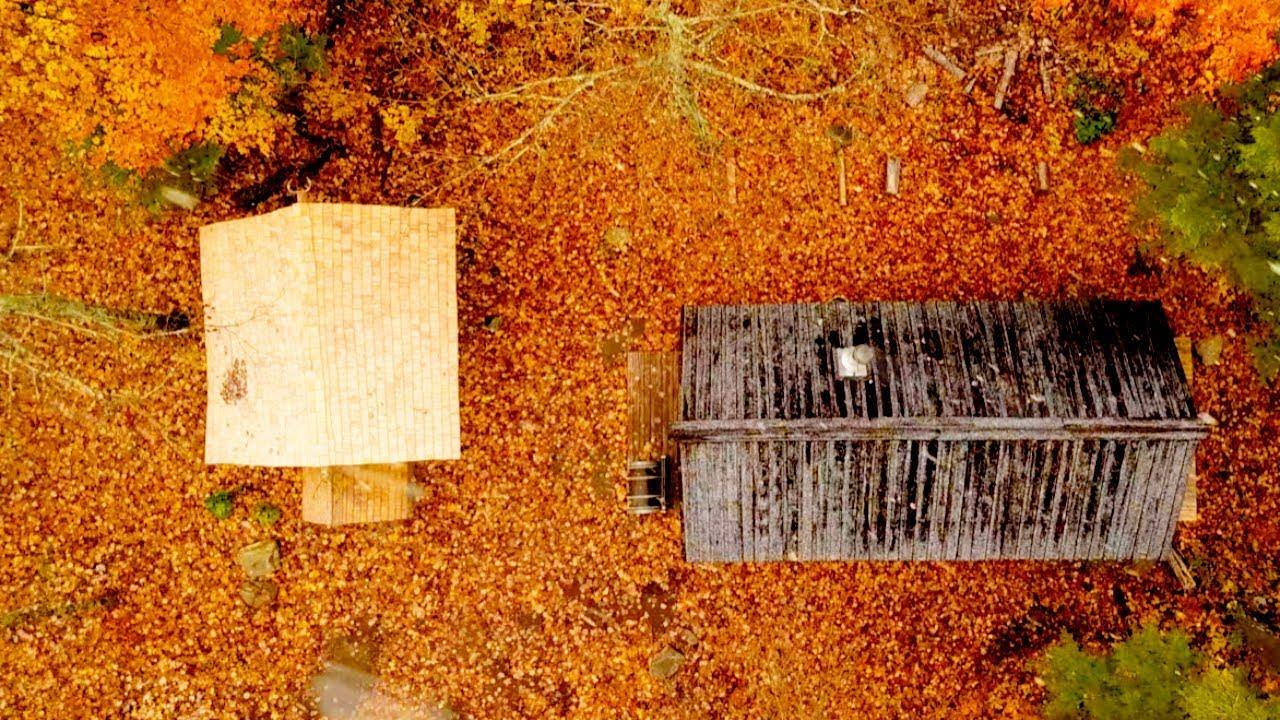 log-cabin-sauna-build-ep-2-it-s-a-dog-s-life