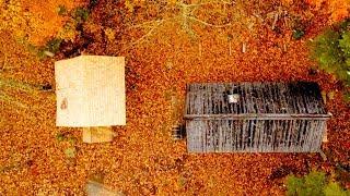 Log Cabin Sauna Build Ep 2 | It's a Dog's Life