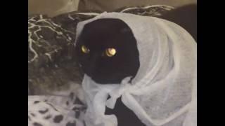 Наш кот , ужастик, ужасы , приколы с котами, приколы с животными.