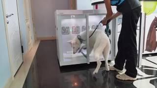 Гостиница для собак. Надодог. Гостиница для животных.